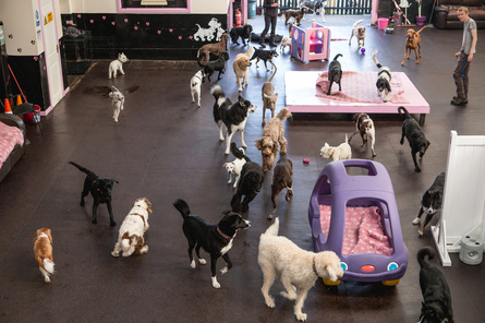 Pet Day Care Building For Sale